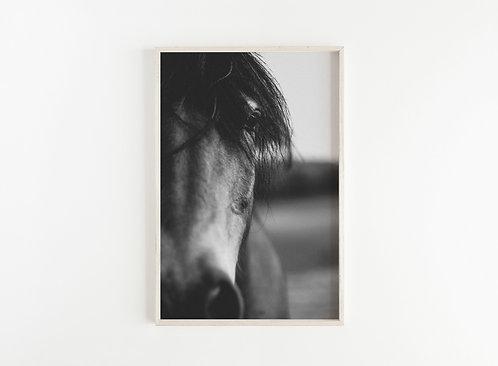 Fine Art Print Pferd I