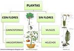 Las Características, clasificación y cui