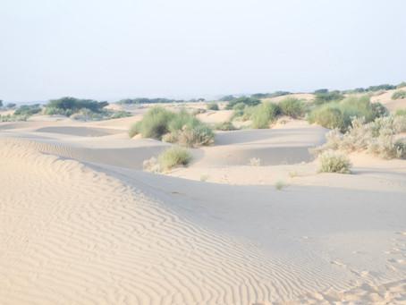 砂漠にて(インド・ジャイサルメール)
