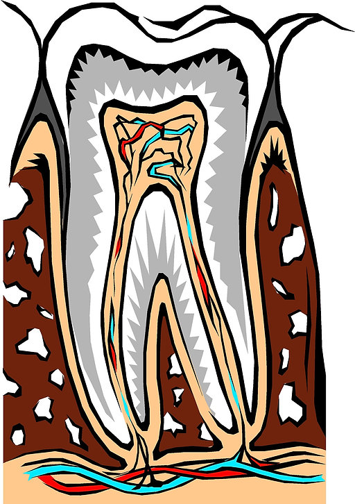 tooth-2183445_1920.jpg