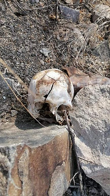 Encuentras Madres Buscadoras el cuerpo de un hombre en el cerro Johnson