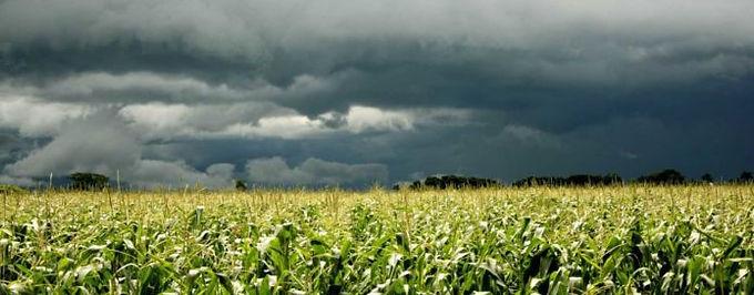 Esperan agricultores recuperación gracias a las lluvias en Sonora