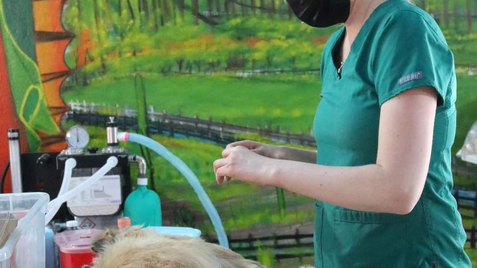 Realiza fundación Para de Perro 238 castraciones a mascotas en el Tour de Esterilización