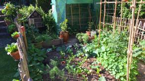 5 tips to start your own veggie garden (EN/FR/NL)