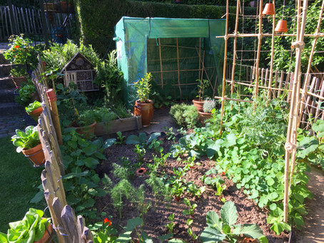 5 tips to start your own veggie garden (EN/FR/NL)
