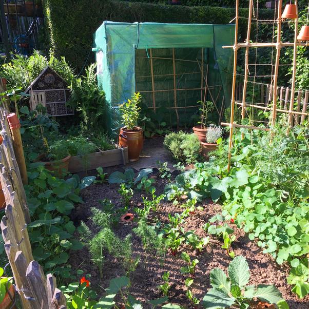 Garden May 2018