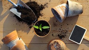 5 ecologic ways to sow your plants! (EN)