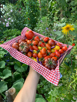 Tomaten en pepers
