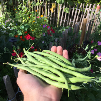 A handful of beans for dinner.