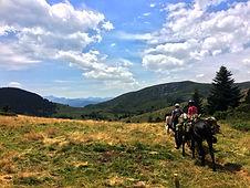 Balade avec un âne en montagne