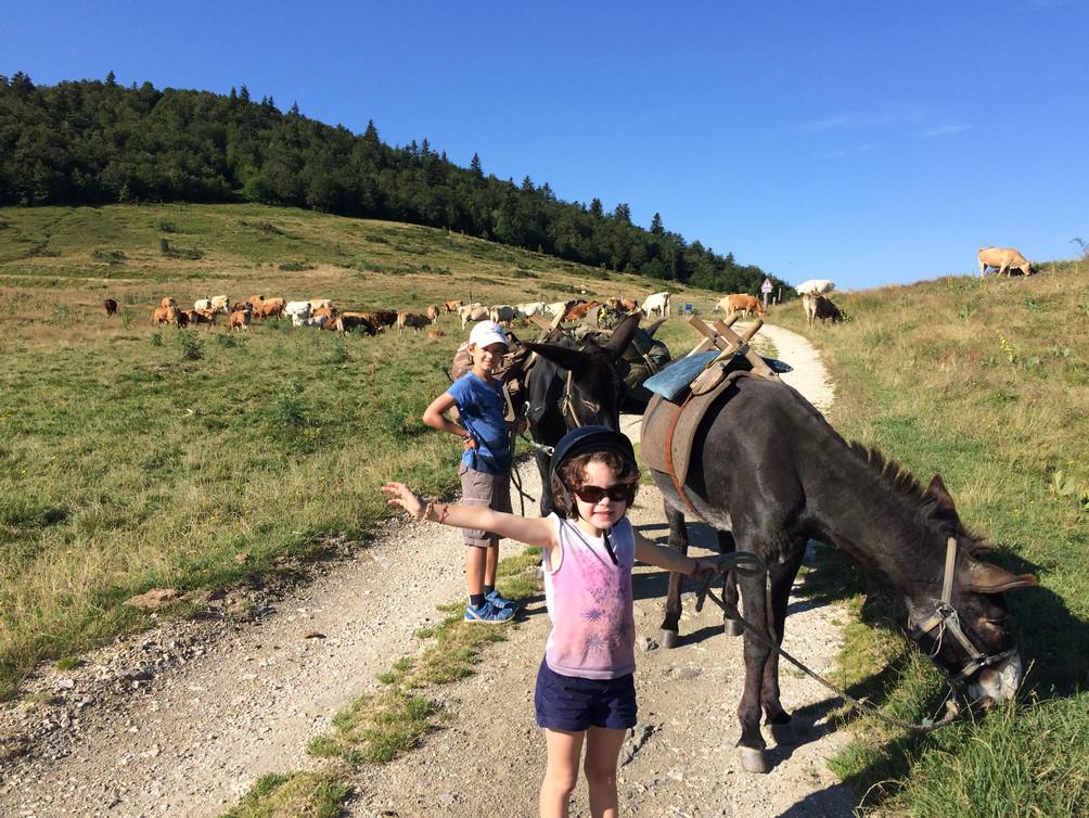 Randonnées à dos d'ânes