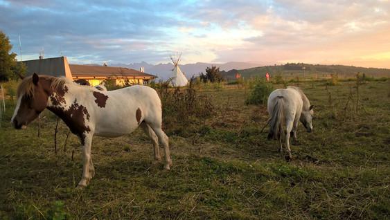 Les poneys au col du h