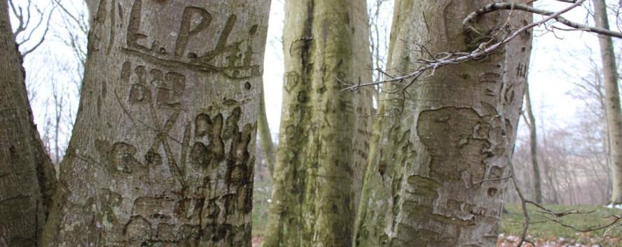 Flere af de store bøgetræer på pladsen, har gamle kærlighedserklæringer, årstal og forbogstaver ridset ind i barken.