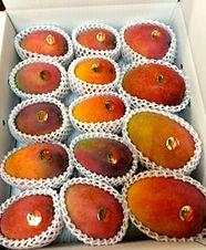 家庭用アップルマンゴー