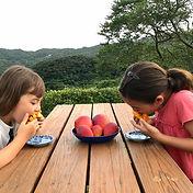 mango tasters.jpg