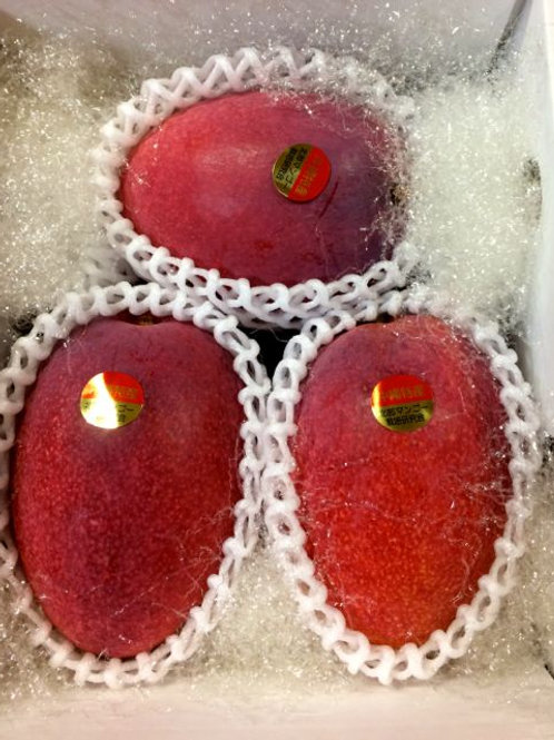 贈答用アップルマンゴー 秀品 1.5kg 3玉