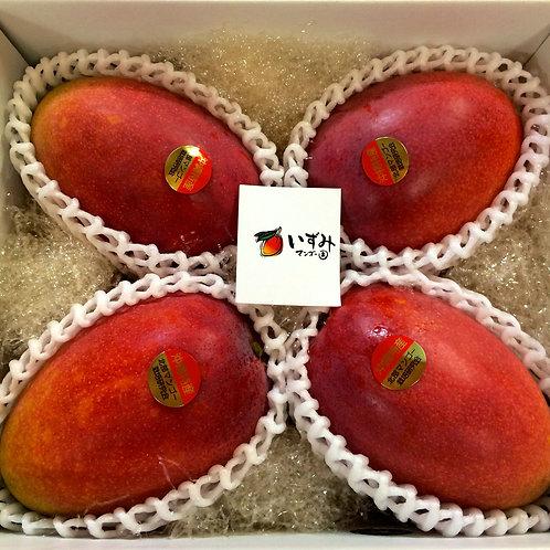 贈答用アップルマンゴー 優品1.5kg 3~4玉