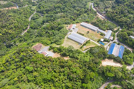 really high drone footage of Izumi Mango Orchard