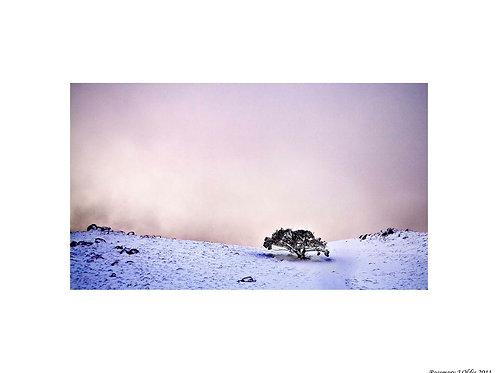 """Lone Tree, Mount Stirling"""