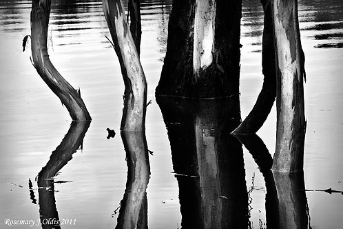 """Trunks and Ripples"""