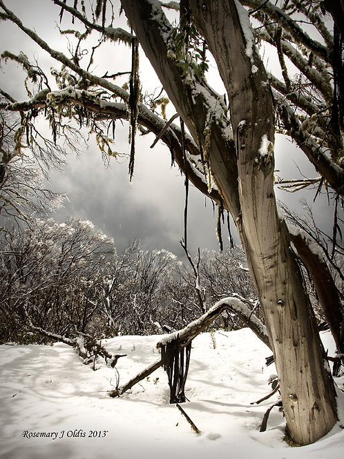 """Snow Storm Ahead"""
