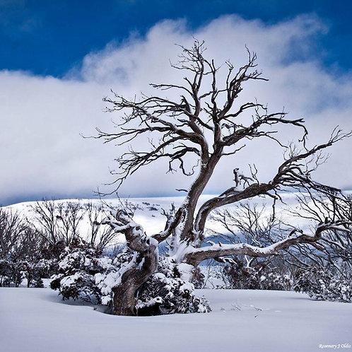 """Winter's Cloak"""