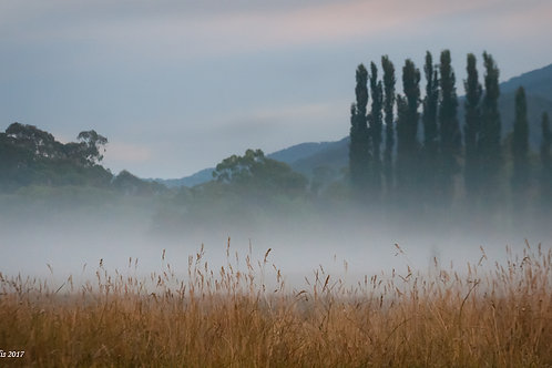 """The Mists Return"""