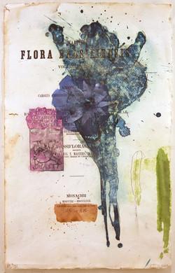 Flora Brasiliensis #201