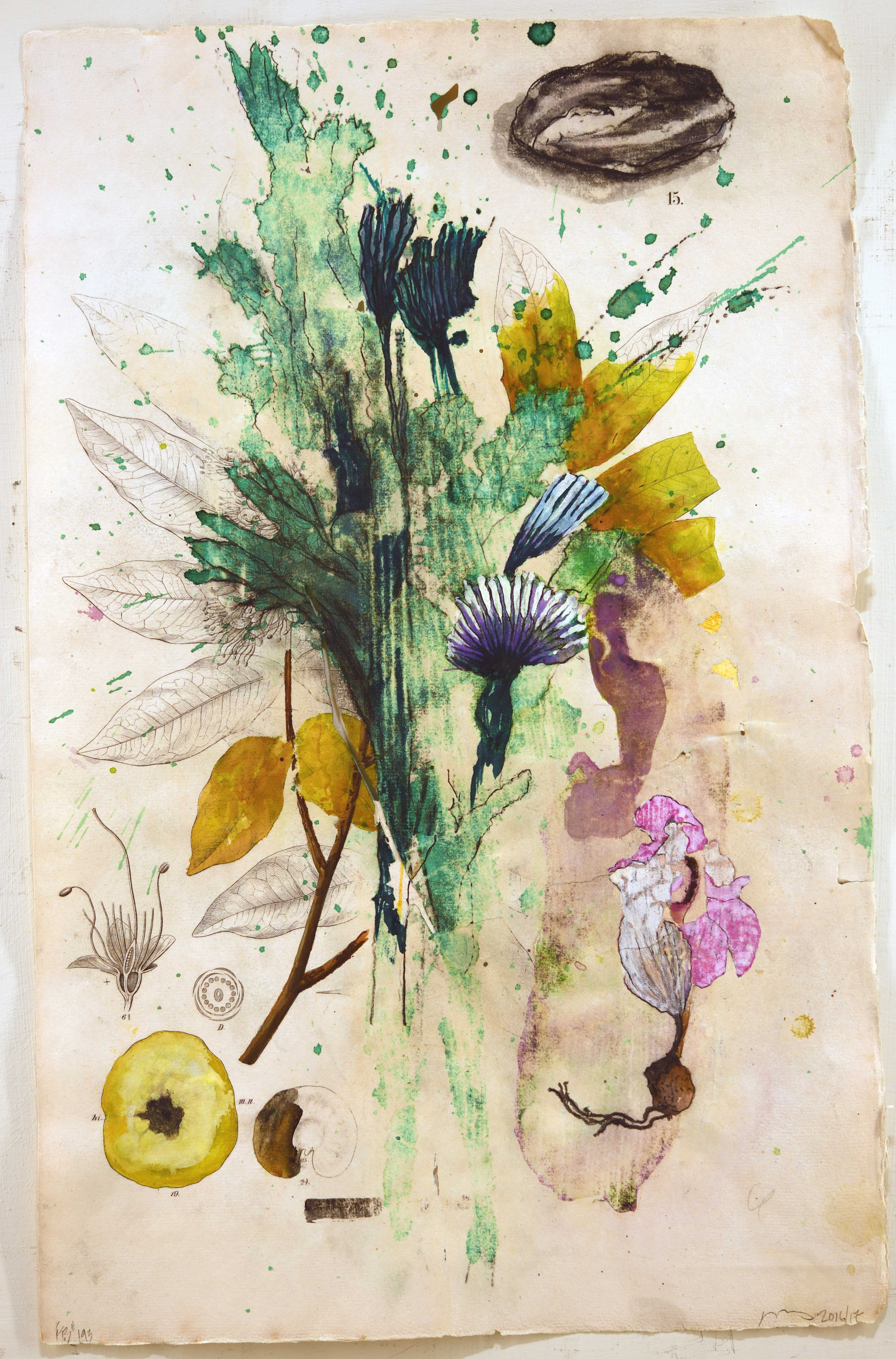 Flora Brasiliensis #193