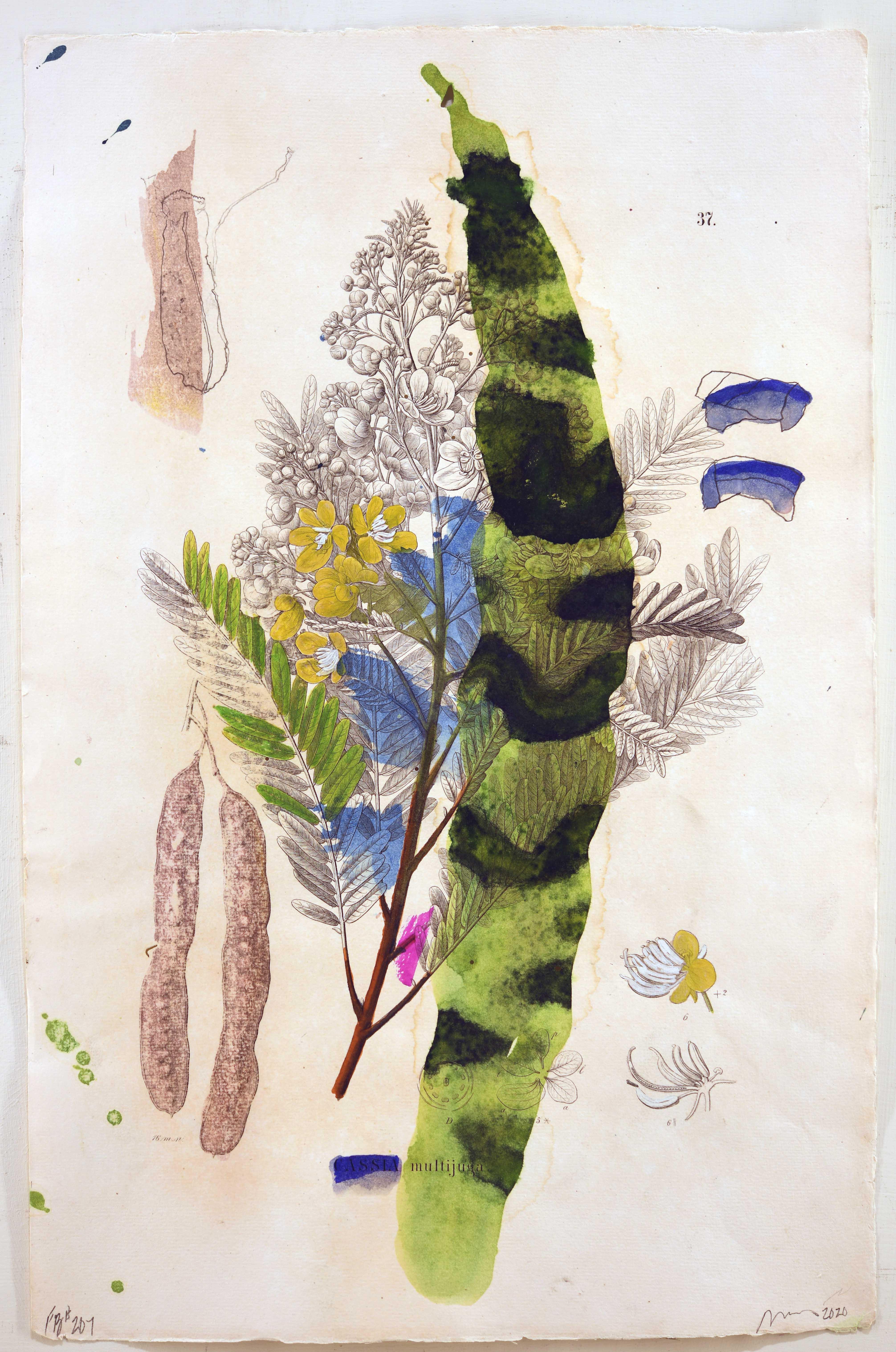 Flora Brasiliensis #207