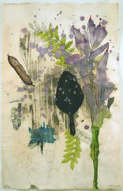 Flora Brasiliensis #205