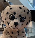 Picture of a stuffed animal named Masch Masch.