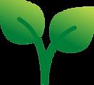 Leaf Asset.png