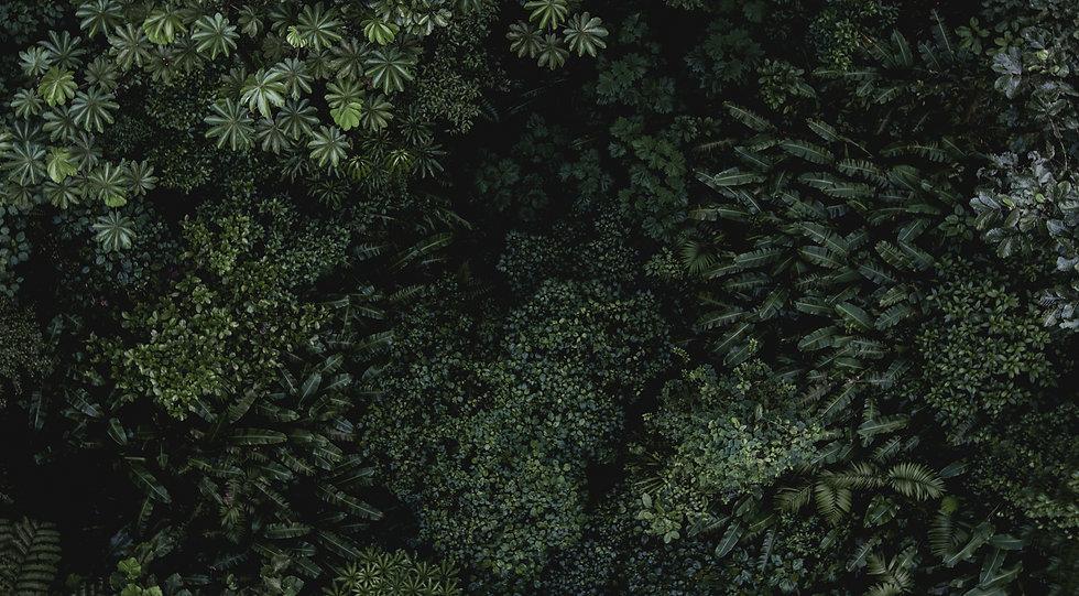 Monteverde_edited.jpg
