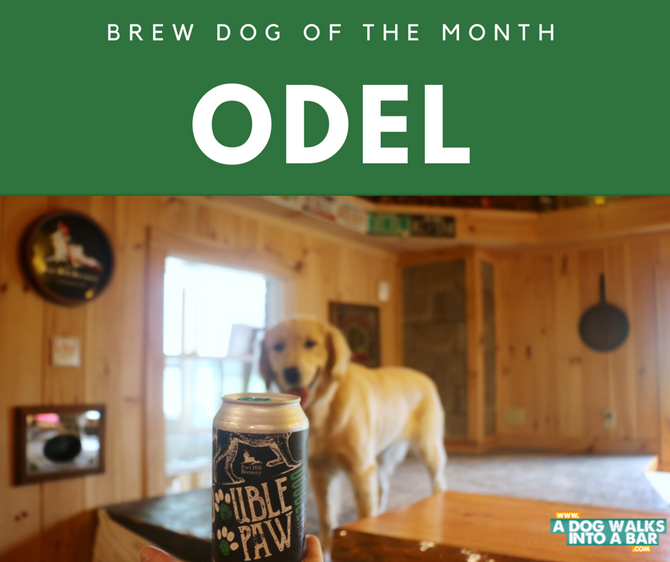 Brew Dog of the Month - Odel from Fort Hill Brewery
