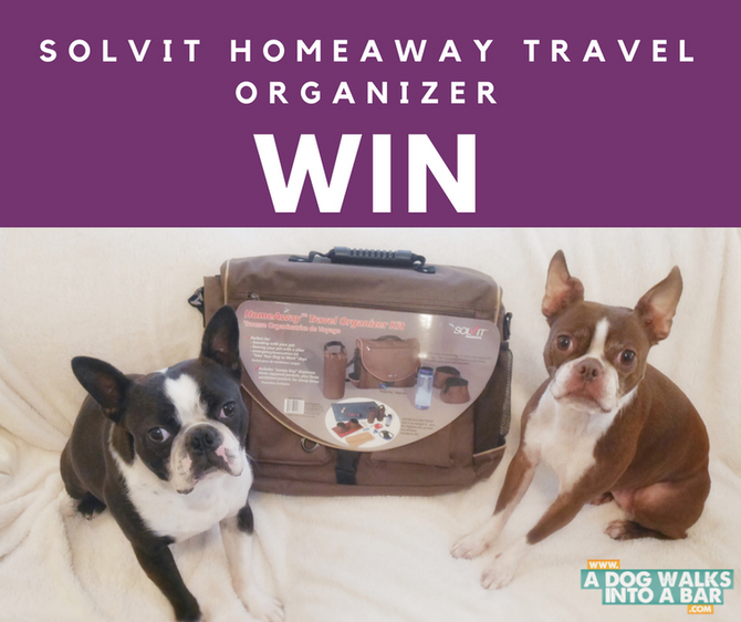 Holiday Travel with Dogs is Easier with Solvit Learn and WIN