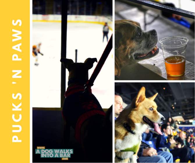 When Dogs, Beer, and Ice Hockey Combine