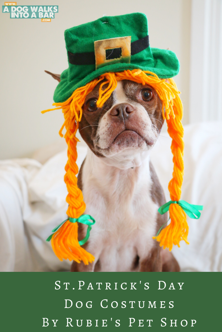 Bean as a redhead for St. Patrick's Day from Rubie's Pet Shop