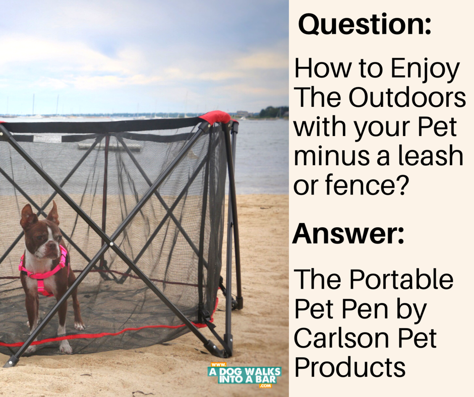 a dog on the beach is easier with the portable pet pen by carlson pet products