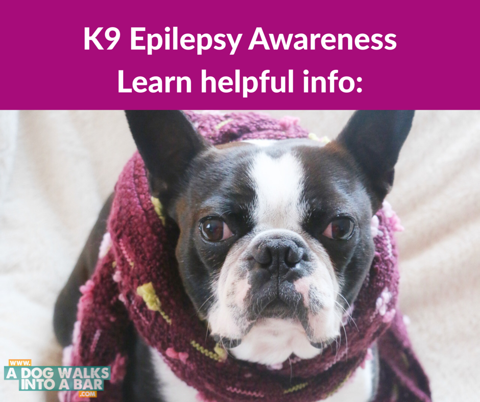 epilepsy in dogs symptoms