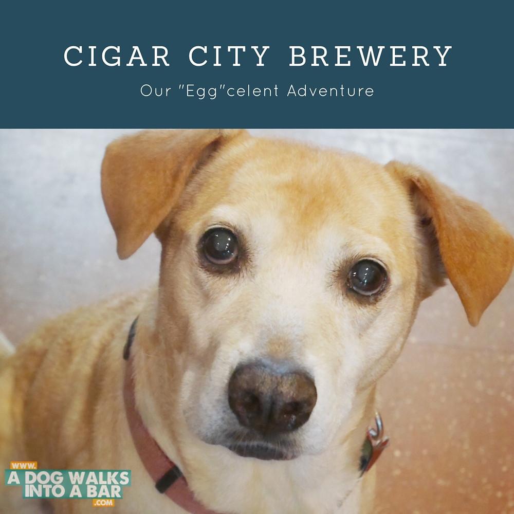 Cigar City Brewery is Dog Friendly