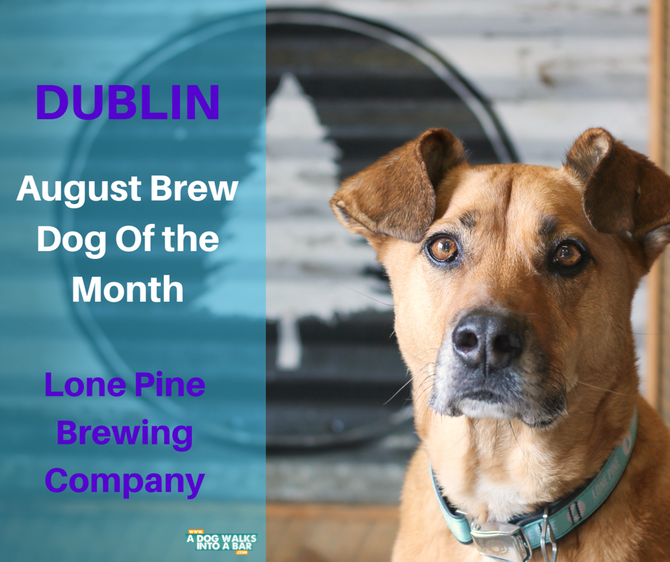 August Brew Dog of the Month - Dublin from Lone Pine Brewing Company