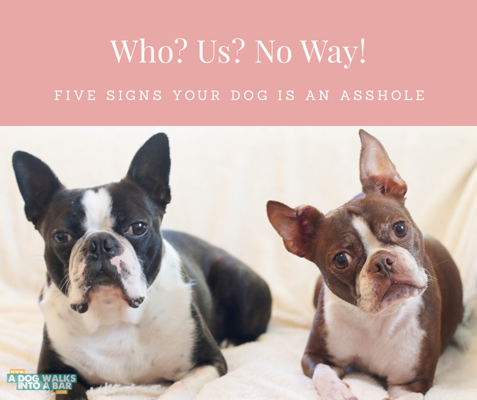 5 reasons your dog is an asshole