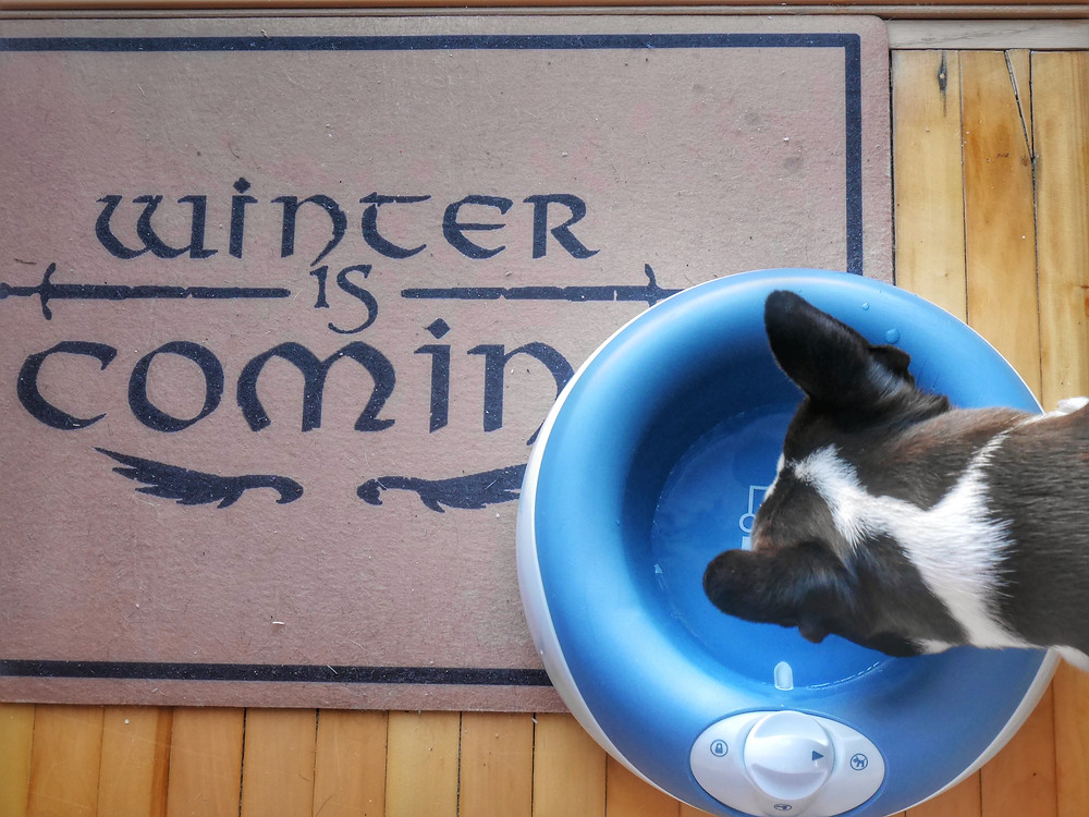 For the Game of Thrones Fans, Yoda enjoys some water near our welcome mat