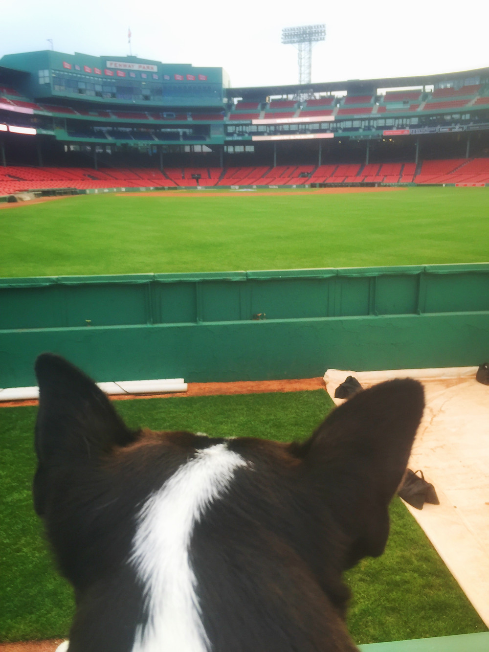 Yoda enjoys a view behind home plate at Fenway Park