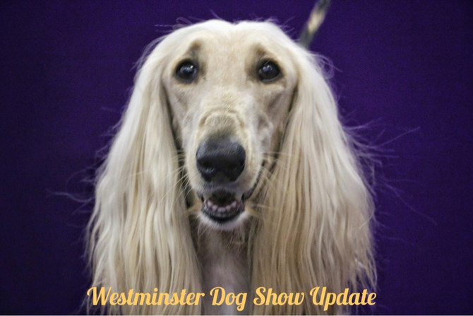 Westminster Photo Updates