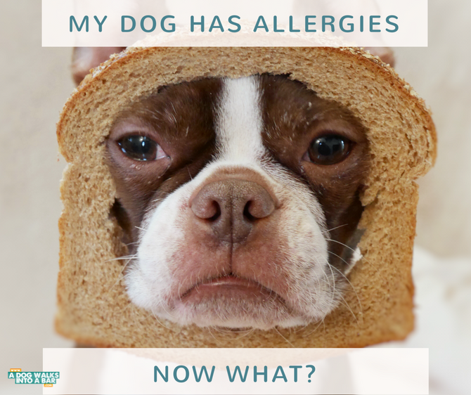 My Dog Has Allergies, Now What?