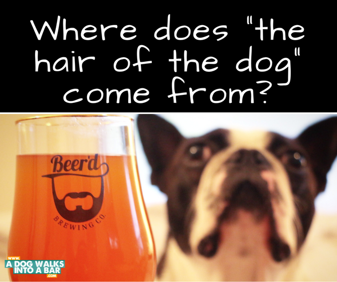 "Where does ""Hair of the Dog"" come from?"