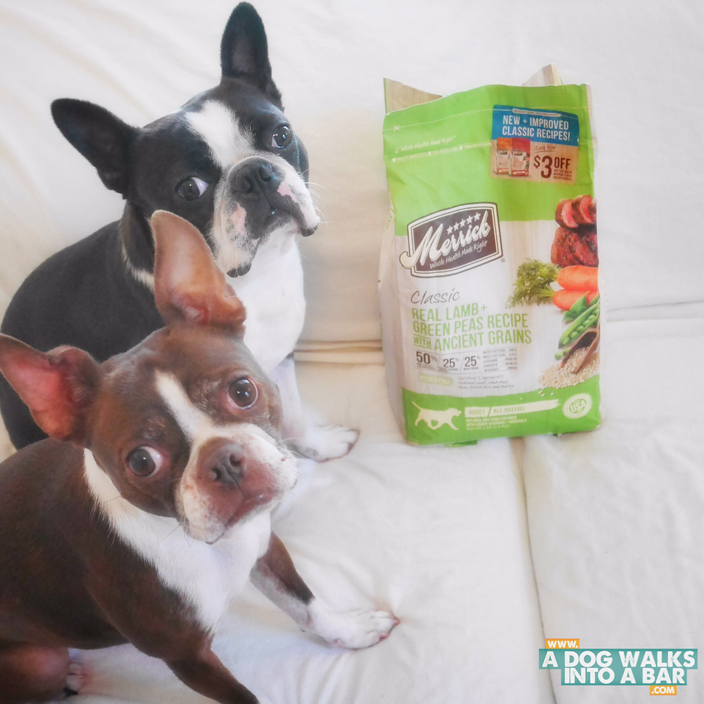 Bean and Yoda with Merrick Pet Food that was donated to the shelter