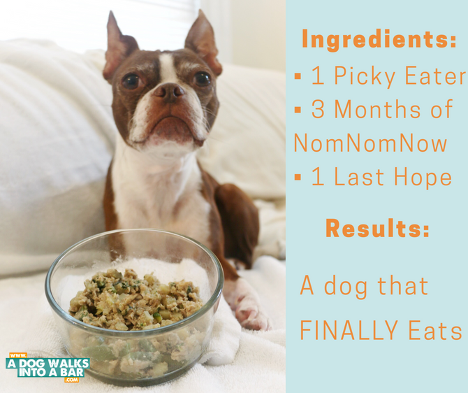 A Food Solution for a Picky Dog - NomNomNow